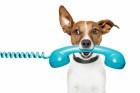 Anrufen!