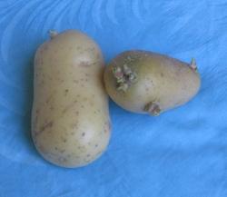 Kartoffel_mitt